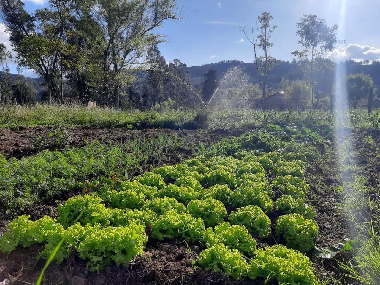 Eras de hortalizas Granja Agroecológica Cielo Verde