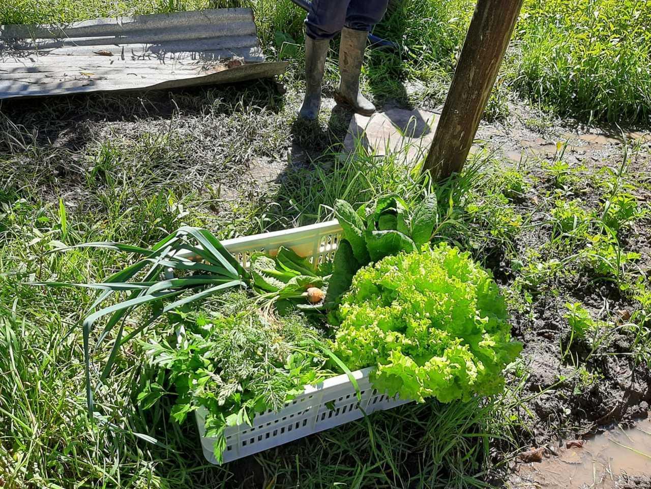 Hortalizas agroecológicas de Granja Agroecológica Cielo Verde