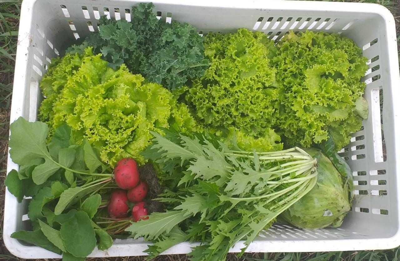 Canasta alimentos Granja Agroecológica Cielo Verde